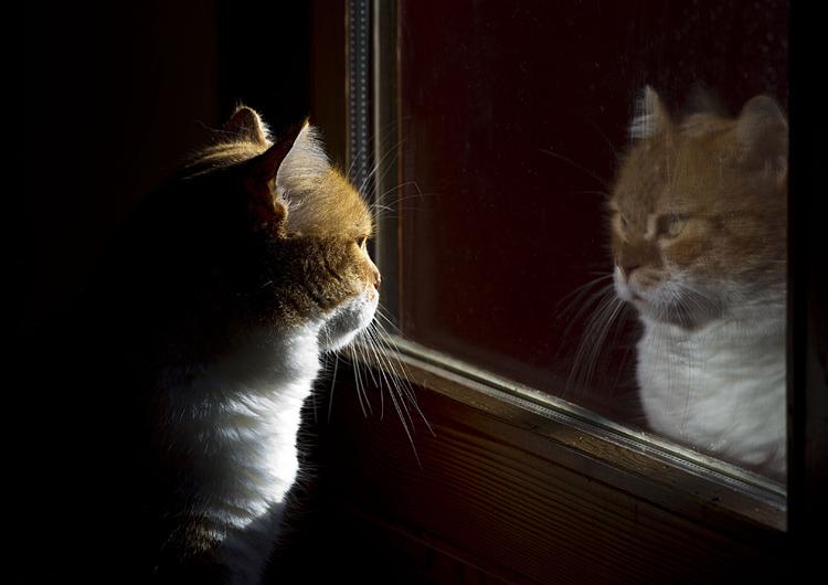 Il principio analogico e gli occhi del gatto